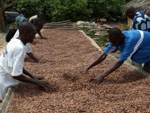 Kakaobohnen werden in der Sonne getrocknet und immer wieder von Hand durchgemischt. Foto: sia