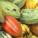 Kakaobohnen Elfenbeinküste