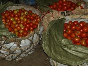 Tomaten auf eine Großemarkt in Vietnam. Foto: sia