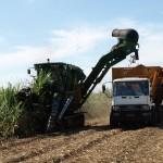 Zuckerrohrernte in Braslien