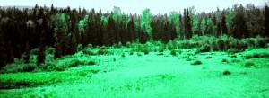 Die ursprünglichen Wälder Kanadas sind in Gefahr, überall dort, wo die Ölindustrie Teersandvorkommen ausbeuten will.  Foto: sia