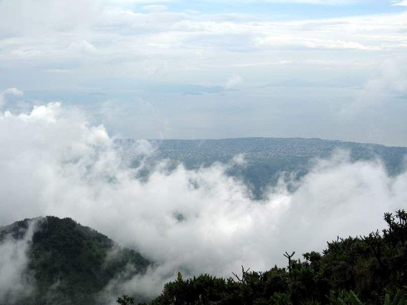 Nebel hängt über dem Tropenwald. Foto: judi