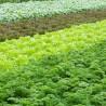 Urbanes Gärtnern: Wenn der Buntbarsch den Salat füttert