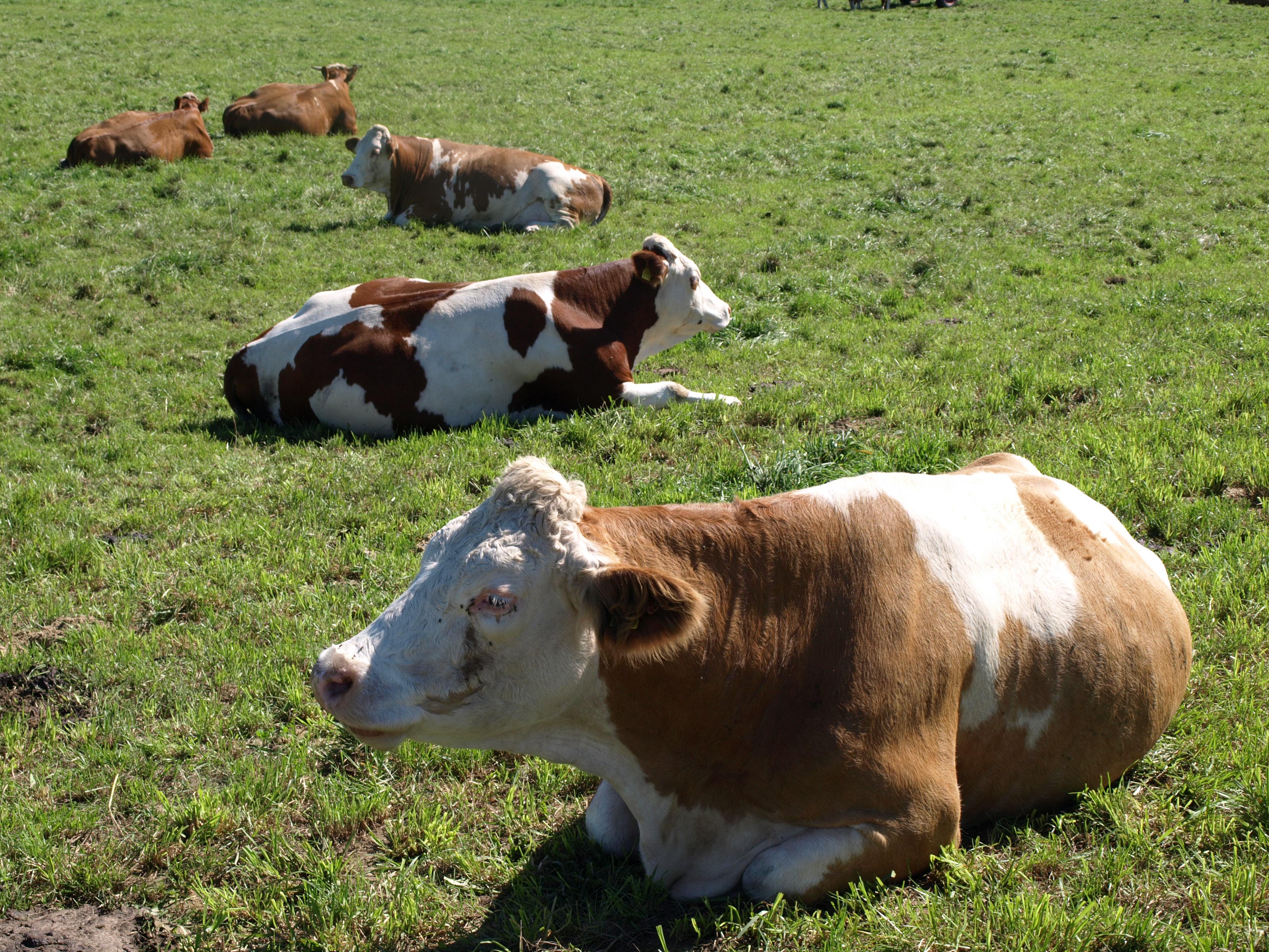 Auf fruchtbarem Boden – Warum die Landwirtschaft Reformen braucht
