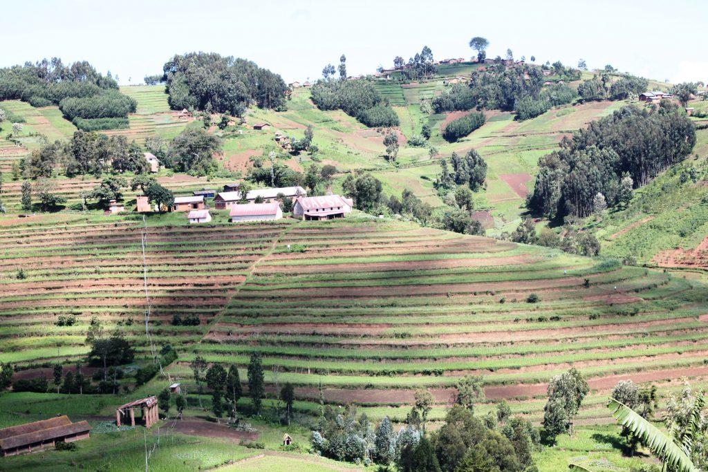 In der Region Masereka fallen die Ernteerträge gering aus. Foto: JPK