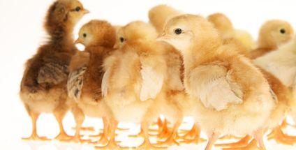 Fleisch kennzeichnen wie Eier? Das geht, wenn man will